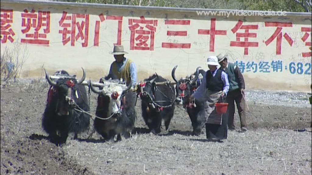 Landleben in Tibet