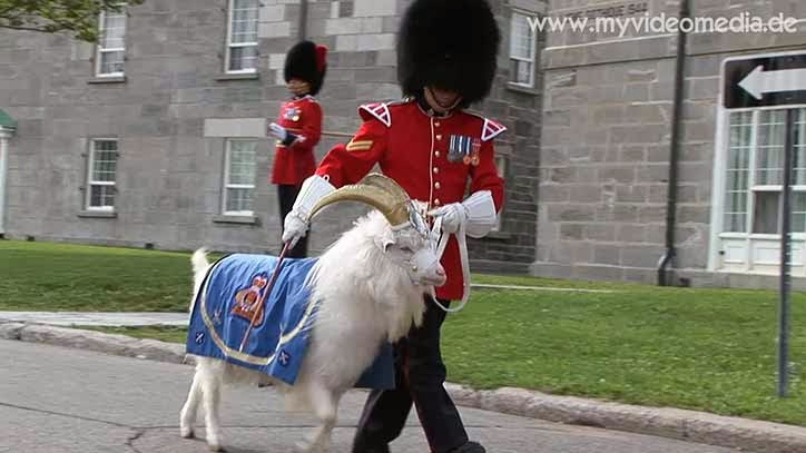 Batisse- the Royal Goat at Changing of the Guard