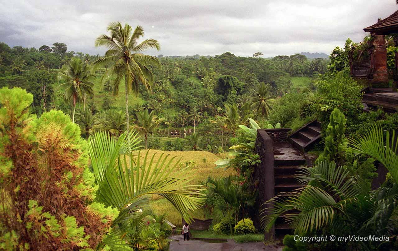 Gunung Kawi paddy fields