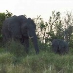 Kruger National Park – Elephants