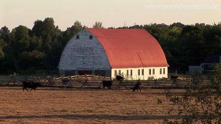 Typisch kanadische Rinderfarm