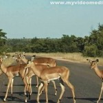 Kruger National Park – from Phalaborwa via Letaba up to Olifants River
