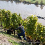 Viticulture on the Moselle