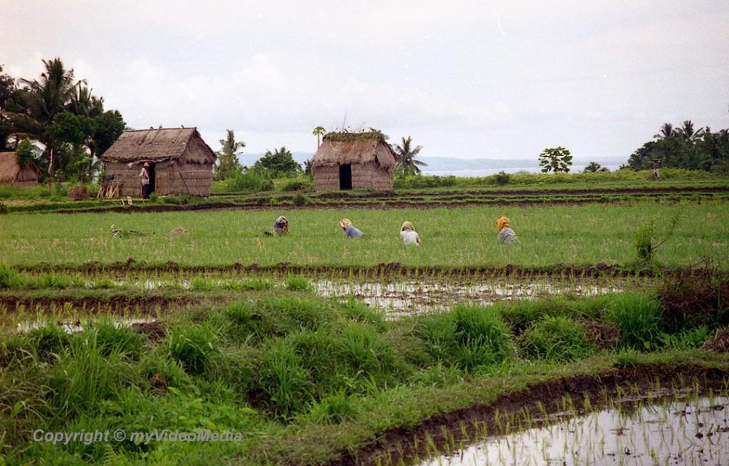 Tenganan - Bali