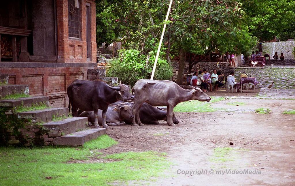 Dorf der Bali Aga