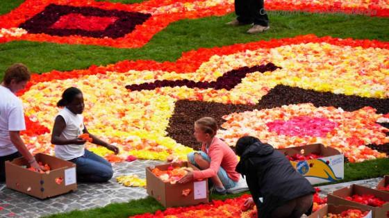 Helfer Blumenteppich
