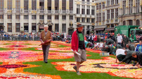 Organizers Flower Carpet