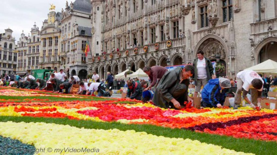 Construction Flower Carpet