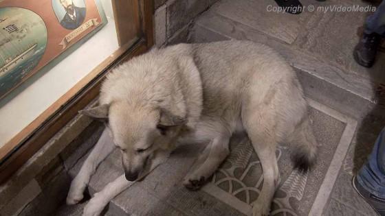 Dog in Plaka