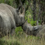Time is running out – Help Save Rhinos and Win!