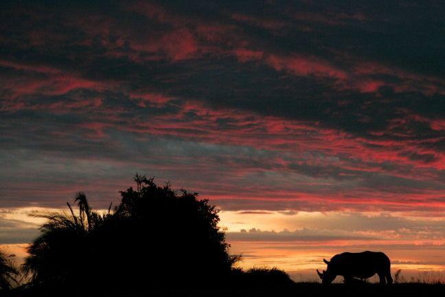 rhino-african-sunset-Beverly-Joubert