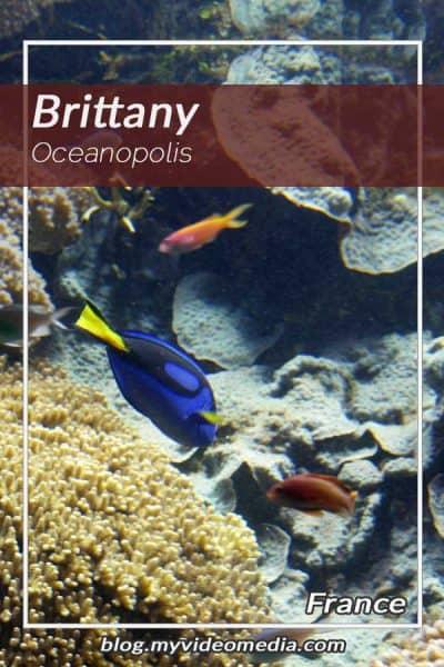 Oceanopolis Brittany - France