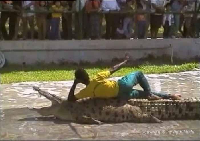 Show Langkawi Crocodile Farm