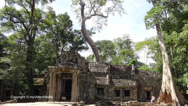 Ta Prohm temple in the dschungel
