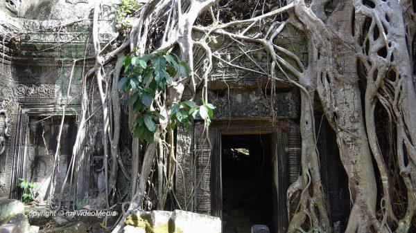 Ta Prohm - Tempel im Dschungel