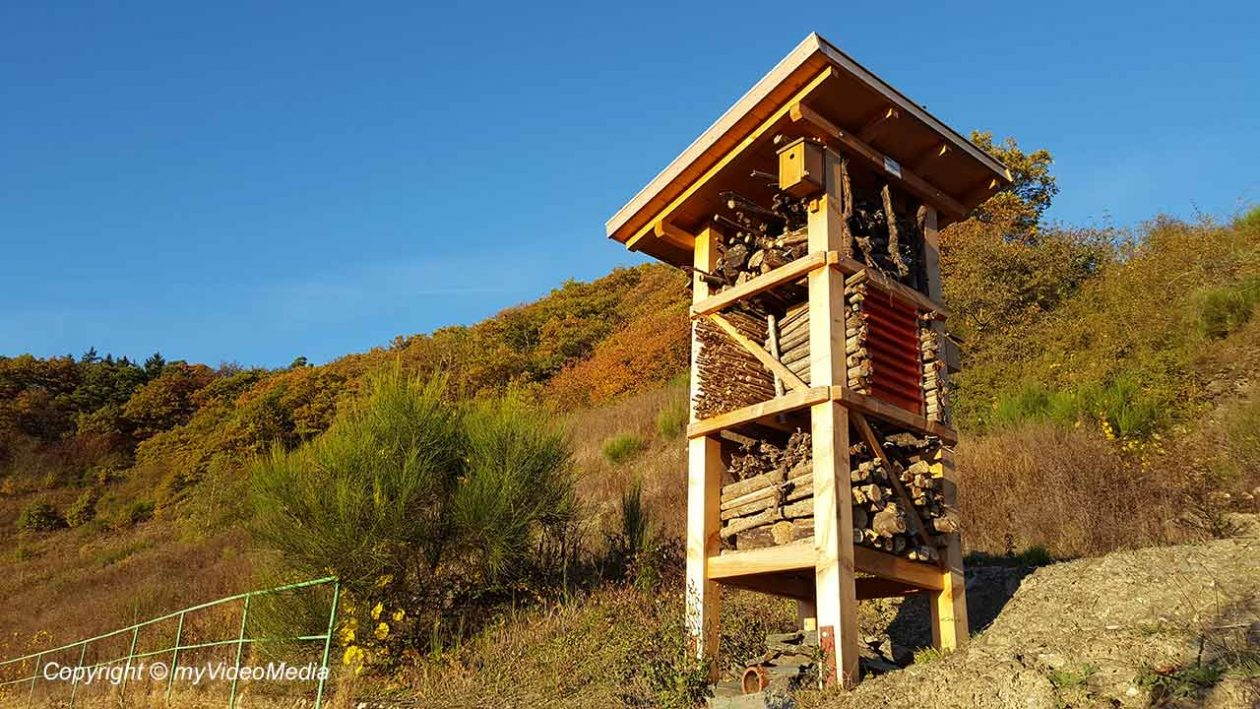 Insect Hotel Wehlen