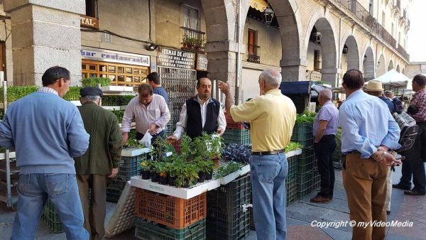 Market at Plaza del Mercado Chico