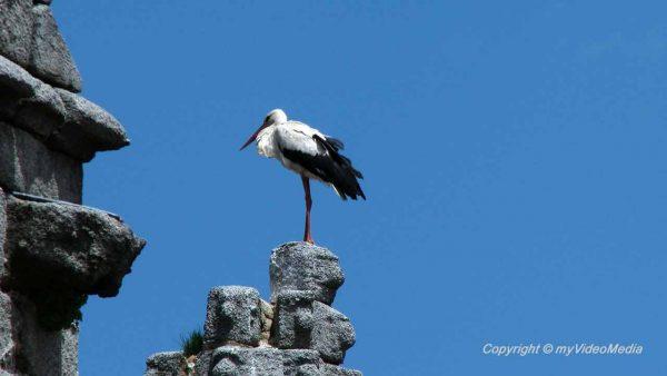 Storch in Avila