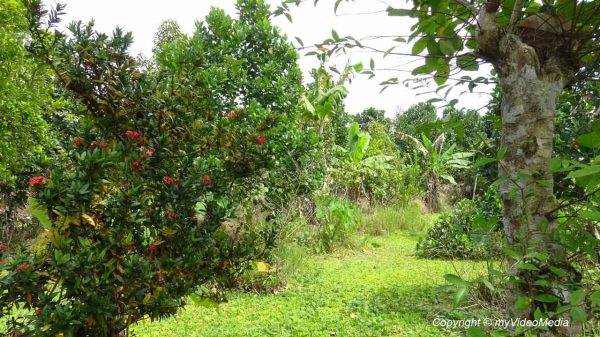 Mekong Garden