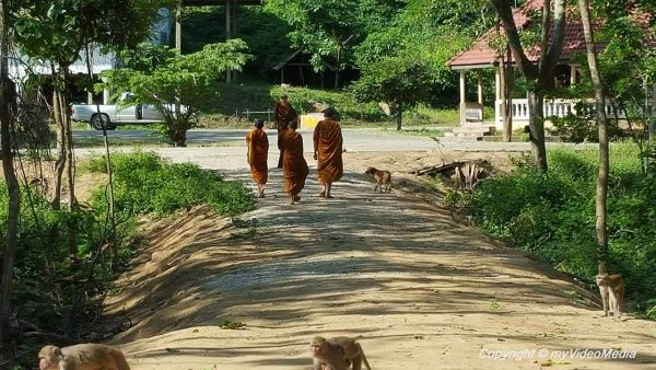 Rhesus monkeys near Wat Tham Pha Mak Ho