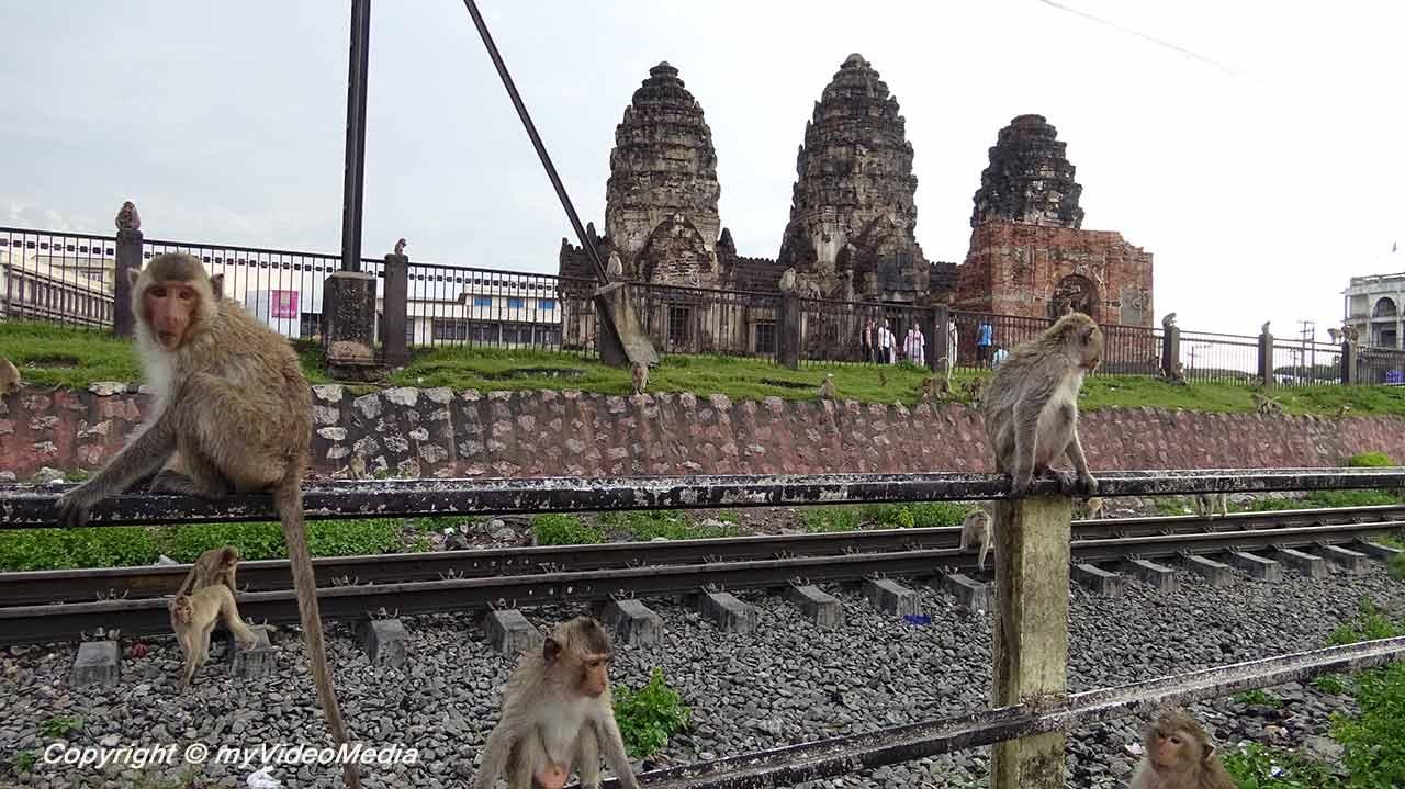 Affen in Lop Buri