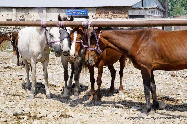 Viehmarkt Ösgön