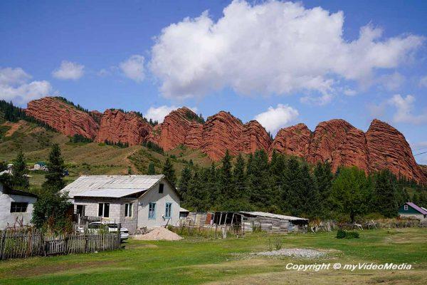 Sieben Bullen in Kirgisistan