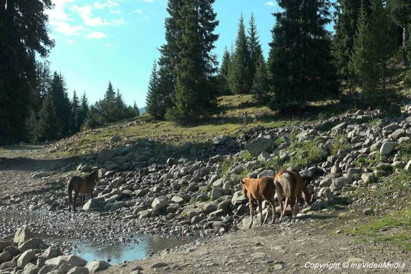 Pferde auf dem Weg nach Eki Chat
