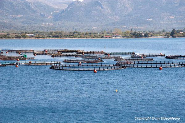 fish farms Agrilla